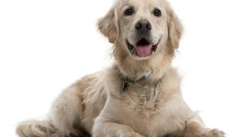 Separazione personale fra coniugi e ''affido'' dell'animale di affezione – Altalex