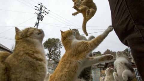 Giappone   I gatti muovono l'economia – Eastonline (Blog)