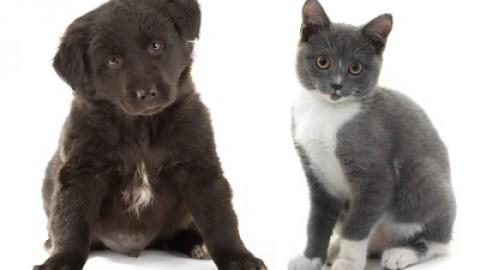 Cani e gatti: quanto costa assicurarli e cosa copre la loro RC – Facile.it