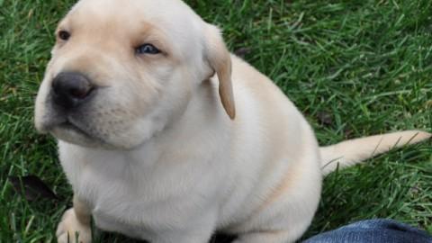 """Perché con cani e bambini facciamo """"quella"""" voce – Focus.it – Focus"""