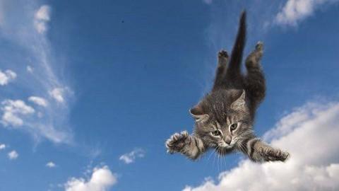 Come fanno i gatti a rimanere spesso illesi dopo una caduta dall'alto? – greenMe.it
