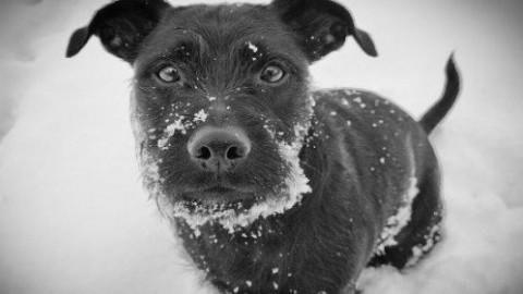 Come proteggere le zampe del cane con ghiaccio e neve – greenMe.it