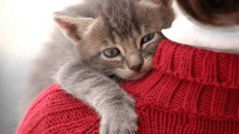Il gatto, il migliore amico dell'uomo – Il Faro