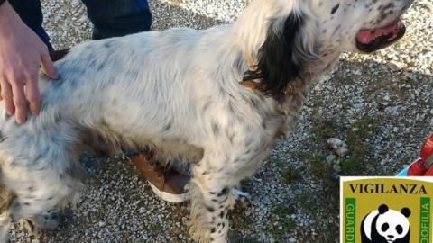 Caltanissetta, cane smarrito da un mese: guardie WWF lo … – il Fatto Nisseno