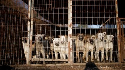 Dalle tavole coreane alle case Usa, salvati dieci cani dal macello – La Stampa