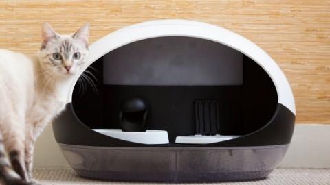 Il sogno di ogni gatto è Catspad, distributore smart di cibo e acqua al … – Macity (Blog)