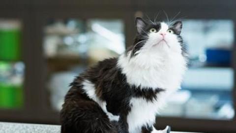 Animali: 2 gatti bionici a Sofia, camminano con zampe in titanio – Meteo Web