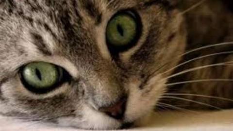 Gatti, unghie e tiragraffi: come mettere al sicuro tappeti e mobilio – Riviera24.it