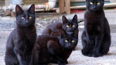 I gatti non soffrono la solitudine, puntigliosa ricerca di etologi britannici – SiciliaInformazioni.com