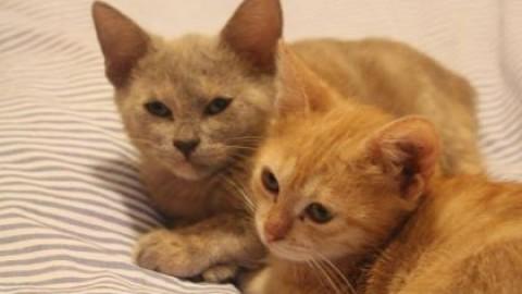 L'anagrafe per i gatti, sette milioni e mezzo nelle case degli italiani – SiciliaInformazioni.com