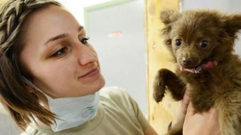 Nasce la mutua per cani e gatti di affezione – GreenStyle – GreenStyle