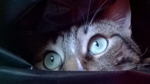 Perché il gatto guarda fisso nel vuoto? – Petpassion.tv
