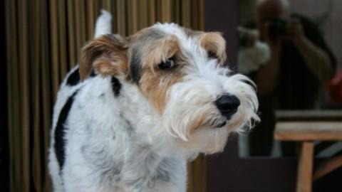 12 problemi del cane anziano – Petpassion.tv