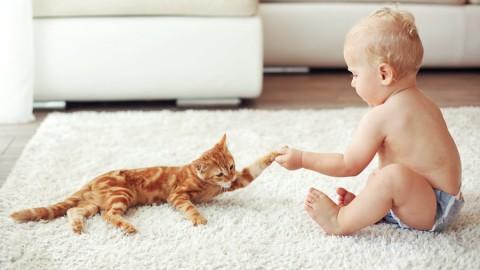 """Il gatto di casa svela i pericoli dei """"ritardanti di fiamma bromurati"""" per … – Il Sole 24 Ore"""