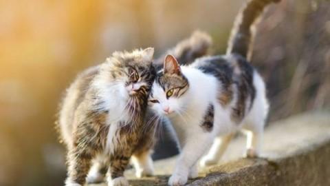 Dedicato ai nostri amici gatti – Famiglia Cristiana