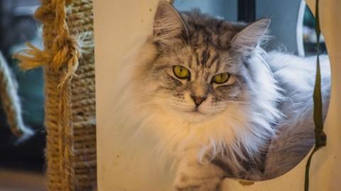 We love Cat's: a casa dei gatti in Europa – Easyviaggio