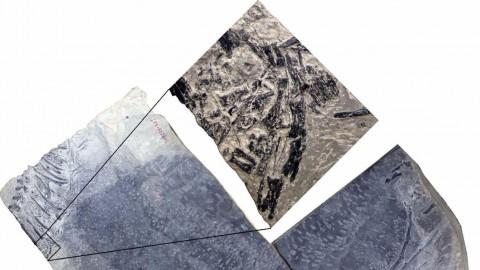 Cina, scoperto il fossile di un animale in gravidanza di epoca pre … – TGCOM