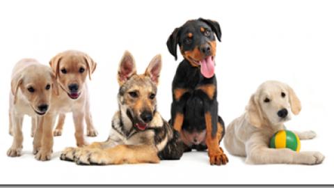 Arriva un cucciolo in casa, come comportarsi?