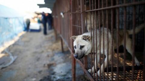 Il più grande mercato di carne di cane in Corea del Sud sarà chiuso – TPI