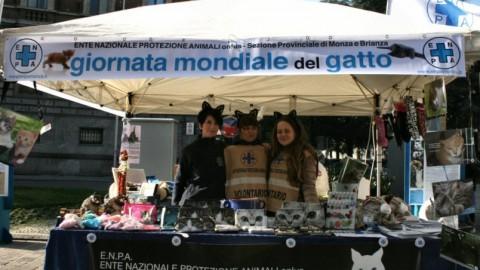 L'Enpa in centro a Monza celebra la Giornata Mondiale del Gatto – Qui Brianza