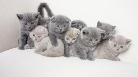 """Giornata mondiale del gatto: """"miao"""" in tutte le lingue del mondo – Dove Viaggi"""