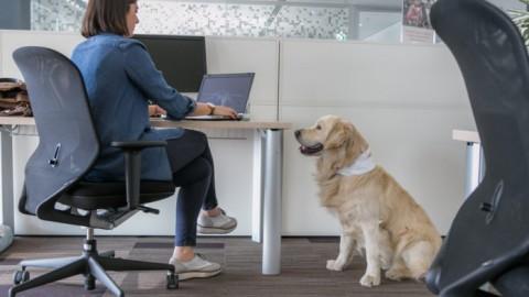Vita da cani. Una birra e un lavoro a misura di cane – Agenpress