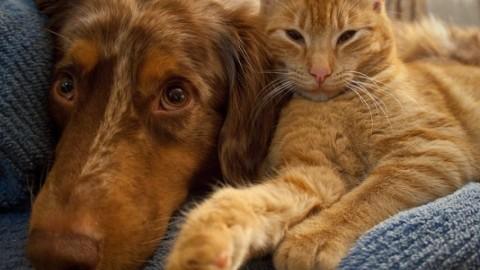 Vita da cani. Cani e gatti i migliori amici dei bambini, piu' che fratelli … – Agenpress