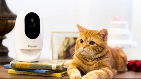 Pawbo+ tiene sotto controllo gli animali domestici – Corriere Quotidiano