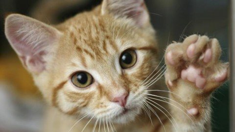 Gli italiani amano i gatti, ma ogni anno 70 mila vengono avvelenati – Globalist.it