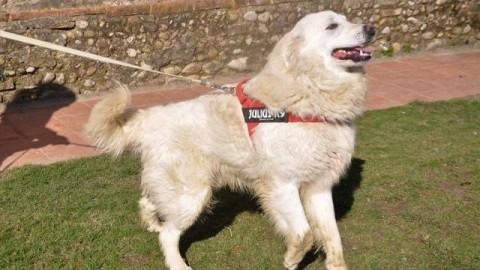 Cani smarriti e in cerca di casa: a #cercocuccia anche un gatto dalla … – gonews