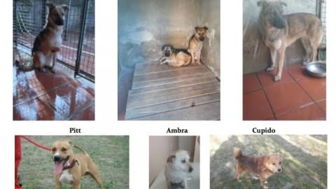 Adotta un cane per amico: il Comune aiuta sette cuccioli senza casa – gonews