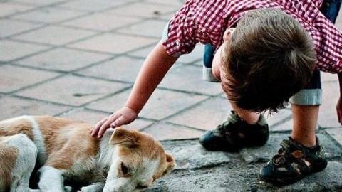 In Argentina meno tasse per chi adotta un cane abbandonato – greenMe.it