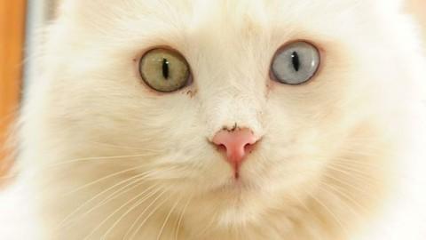La giornata mondiale del gatto: ogni anno ne vengono avvelenati 70 … – Il Messaggero