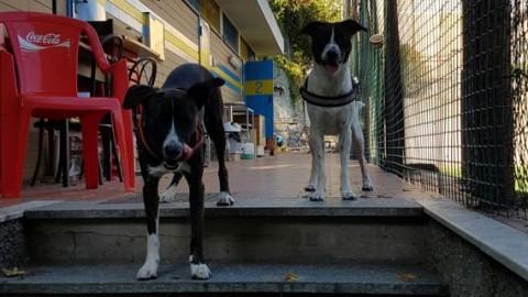 Vita da cani in città, la prima regola: non esistono regole. Casi e … – Il Secolo XIX