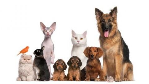 Mutua per cani e gatti: arriva anche in Italia la tutela gli animali … – Investire Oggi