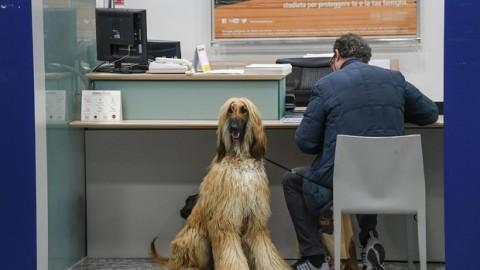 Una mutua per cani e gatti – l'Adige – Quotidiano indipendente del Trentino Alto Adige