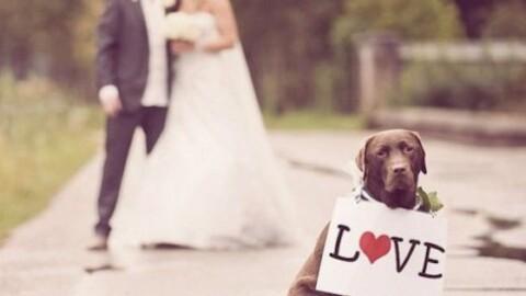 «Tu ti sposi e noi badiamo al tuo cane» – La Gazzetta del Mezzogiorno