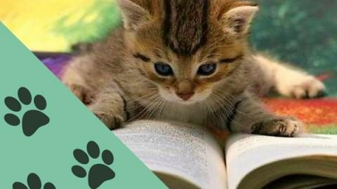 Lamezia, il 17 febbraio la 'Giornata nazionale del gatto' a Palazzo … – Il Lametino