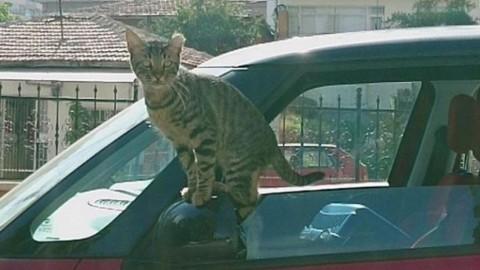Il gatto sgattaiola in auto per farsi adottare – La Stampa