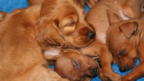 Traffico cuccioli: maxi processo a Udine. 8 coinvolti, 5 rinviati a giudizio.