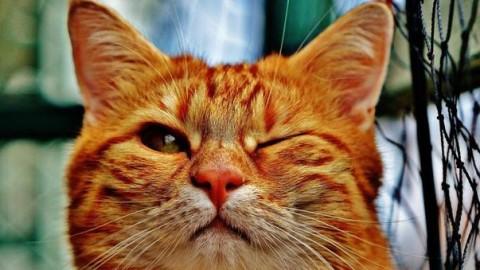 """""""I gatti non fanno impazzire"""", una ricerca smentisce i timori sui felini – Leggo.it"""