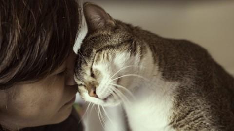 L'intelligenza del gatto non è inferiore a quella del cane – LifeGate