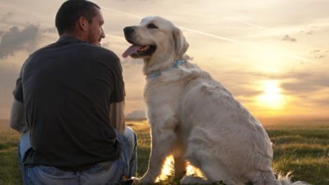 Siete nevrotici? Attenzione, il vostro cane potrebbe esserlo tanto … – Meteo Web