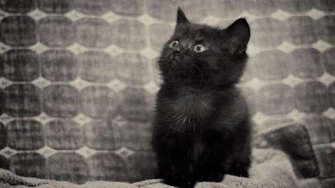 Giornata del Gatto, AIDAA: in Italia sono 7 milioni – Meteo Web – Meteo Web