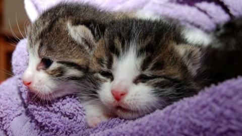 Giornata del gatto: ne avvelenano settantamila l'anno – Meteo Web – Meteo Web