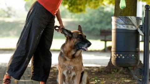 Controlli e multe per chi non raccoglie le deiezioni del proprio cane – Oggi Treviso