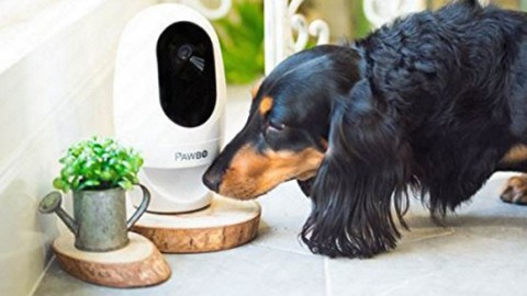 Pawbo+ – la videocamera wireless interattiva per gli animali … – PuntoCellulare.it