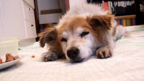 Animali domestici: sgravi fiscali per chi adotta – Quotidianocasa