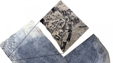 Scoperti in Cina i resti del dinosauro… 'mammifero' – Rai News