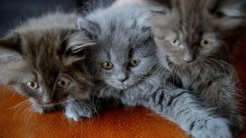 Il giorno dei gatti – Rai News
